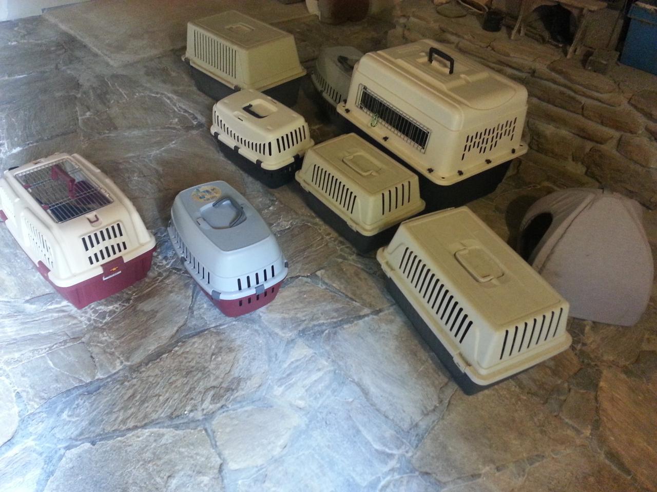 Dépot des 11 chats dans leurs nouvelle maison