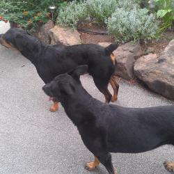 Paco et Lola