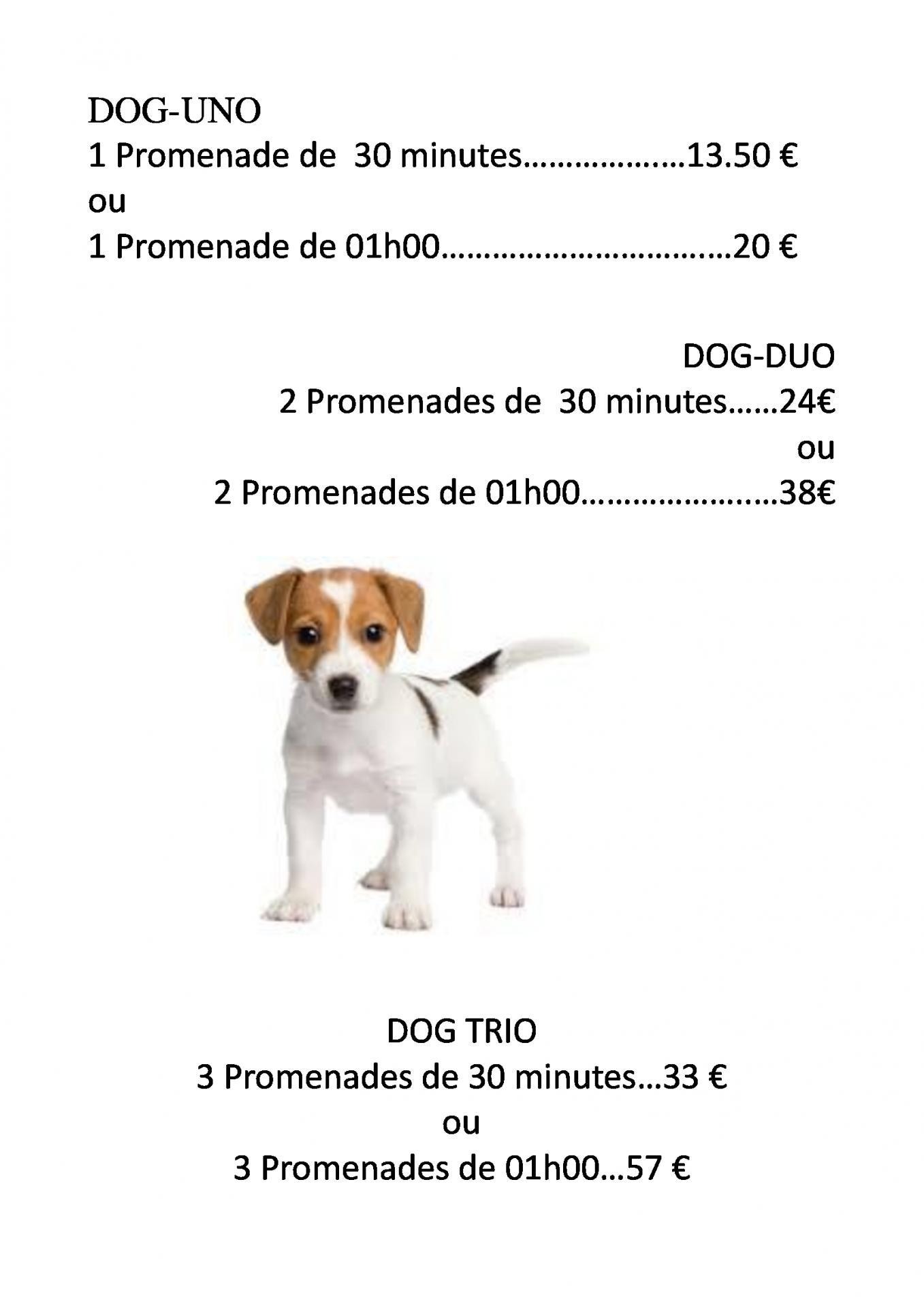 tarif pour chien